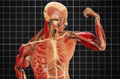 Viaje al interior del cuerpo humano impresionante il blog for El interior del cuerpo humano